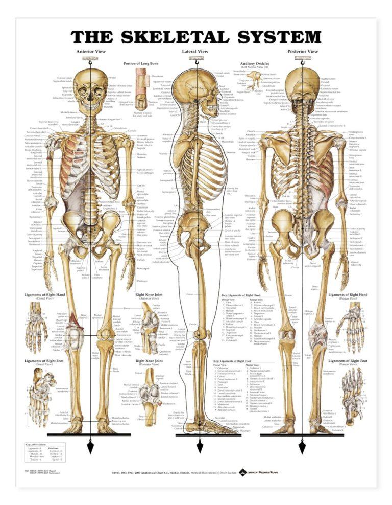 L'innovazione consiste in alcuni Princìpi cardine di cui ancora oggi l'Osteopatia si avvale: L'essere umano è un'unità dinamica di funzioni, il cui stato di salute è determinato da corpo, mente, e spirito. Il corpo possiede dei meccanismi di autoregolazione e autoguarigione. La struttura e la funzione sono reciprocamente inter-correlate. La terapia razionale si fonda sull'applicazione di tutti e tre i principi.